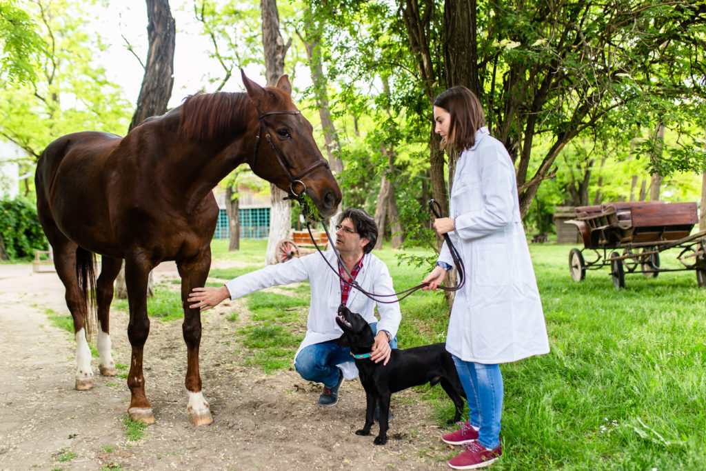 Image of veterinarians for our coverage of Scholarships for Veterinary Students