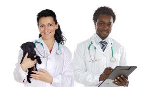 Super Veterinary Scholarships